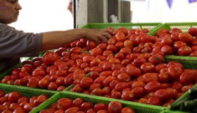 صادرات گوجهفرنگی به پاکستان دلیل گرانی
