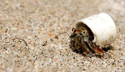 پلاستیک قابلتجزیه و آینده دنیای پلاستیکی ما