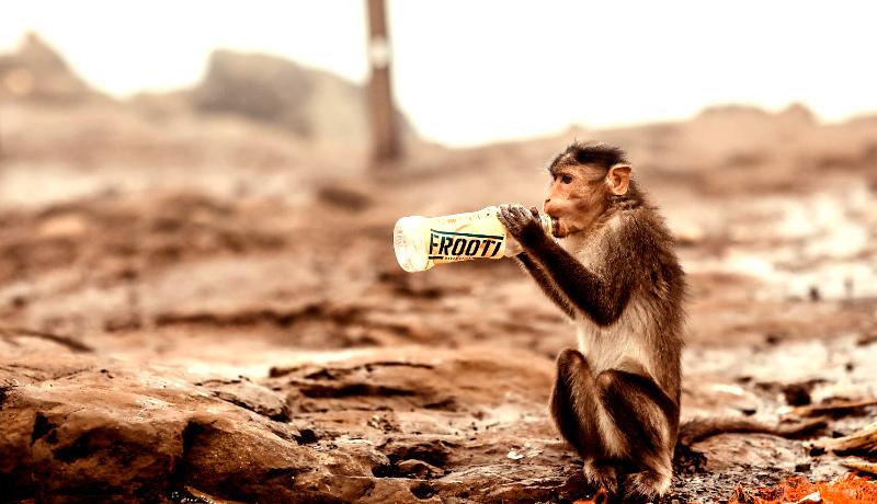 میمون بطری آب پلاستیکی