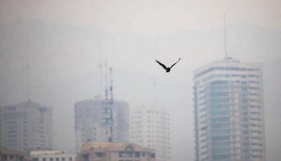 آلودگی هوا پارکهای تهران را تعطیل کرد