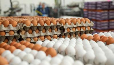 از سرگیری صادرات تخم مرغ