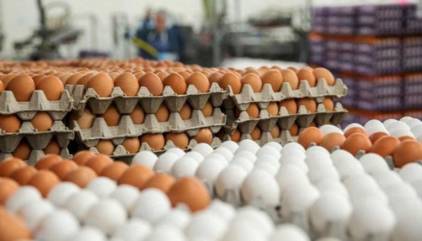جدیدترین قیمت تخم مرغ در بازار امروز ۲۵ مهر