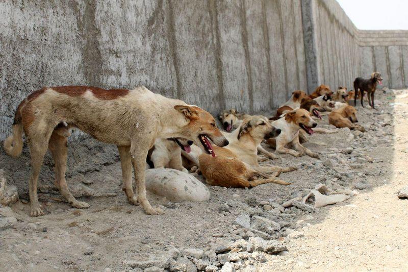 خطر هجوم سگها