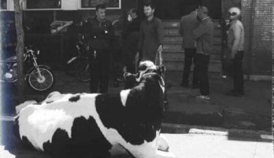 ماجرای فردی که با گاو به بانک رفت چه بود؟