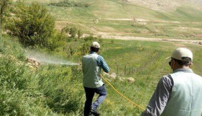 ادامه مبارزه با بحران جدید کشاورزی / جمعآوری ملخها از یک میلیون هکتار زمین