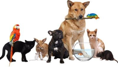 کرونا از حیوانات خانگی به انسان منتقل میشود؟