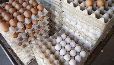 صادرات تخم مرغ متوقف شد