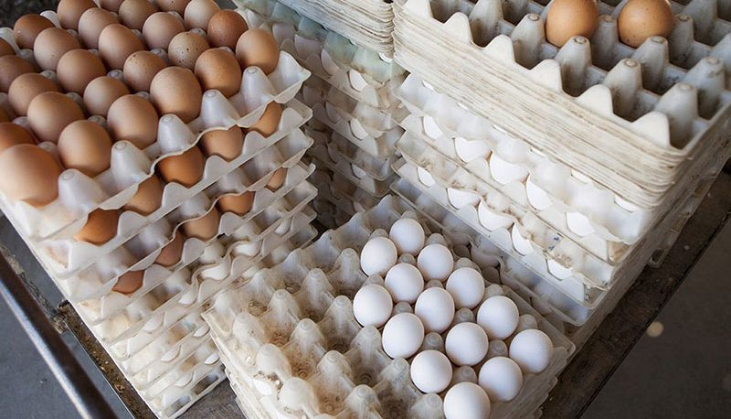 کاهش قیمت تخم مرغ/ تخم مرغ تک نرخی شد