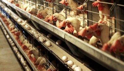 صادرات تخممرغ آزاد میشود / شرط عجیب دولت برای آزادسازی صادرات