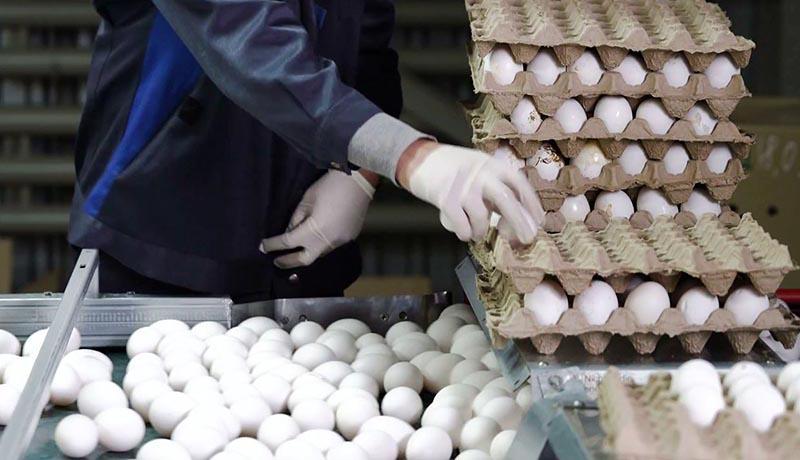 ثبت قیمتهای جدید برای تخممرغ / علت گرانی دوباره تخممرغ چیست؟