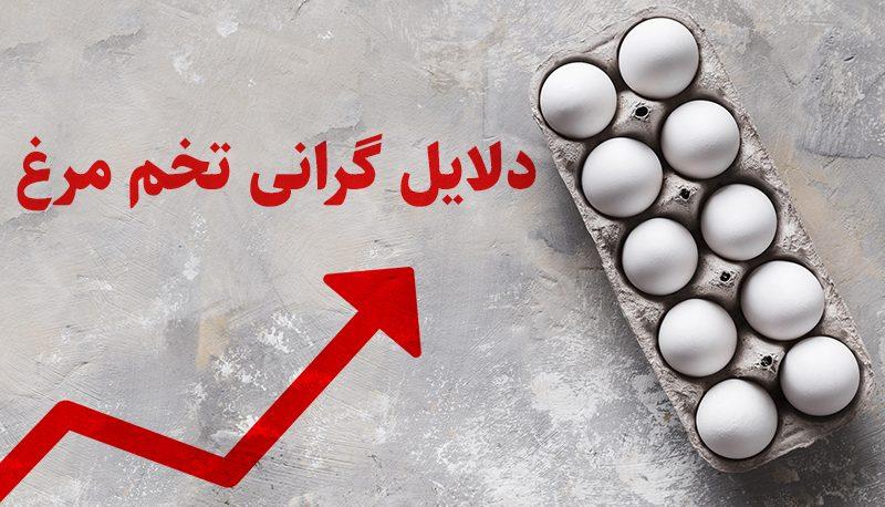 چرا تخم مرغ گران شد؟ (ویدئو)