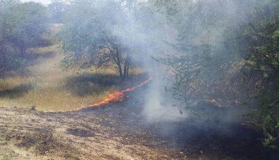 آخرین اخبار از آتشسوزی در جنگلهای هیرکانی