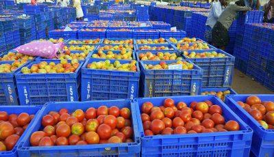 چرا گوجه فرنگی گران شده است؟