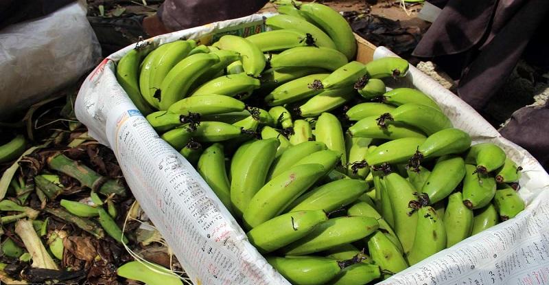 واردات موز از آمریکای لاتین / مجوز واردات یک کانتینر موز 160 میلیون تومان!