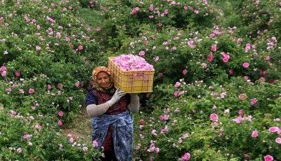 کاهش ۷۰ درصدی تقاضای گل / وضع مردم خوب نیست، گل نمیخرند