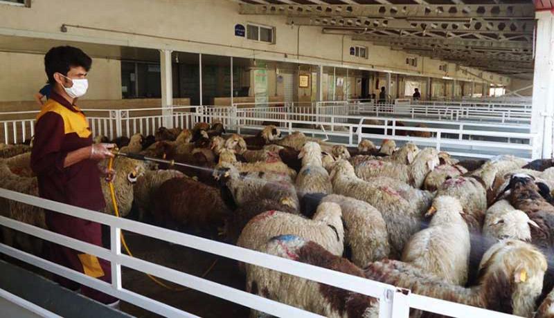 قیمت گوسفند زنده چقدر شده است؟