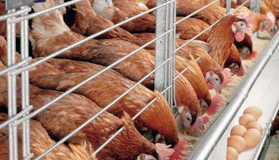 تجمع مرغداران مقابل وزارت کشاورزی/ احتمال ۴۵۰۰ تومانی شدن هر عدد تخممرغ