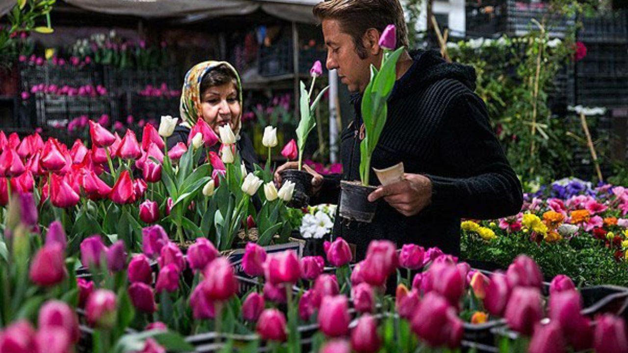 چرا گل گران شد؟ / تولیدکنندگان گل سبزیکار شدهاند!