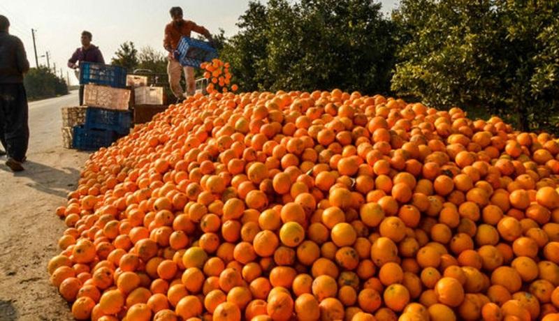 میوههای تنظیم بازاری روی دست دولت ماند/ فساد ۳۰درصدی پرتقال شب عید