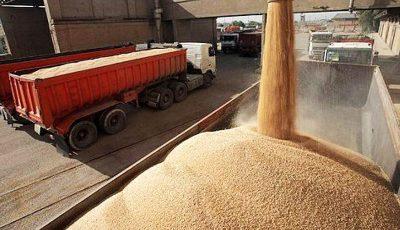 هشدار وزیر جهاد کشاورزی به استانهای مرزی درباره قاچاق گندم