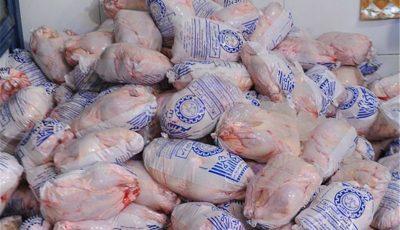 افزایش قیمت مرغ با آشفتگی در بازار نهاده/ خوراک دام دولتی سر از بازار سیاه در آورد