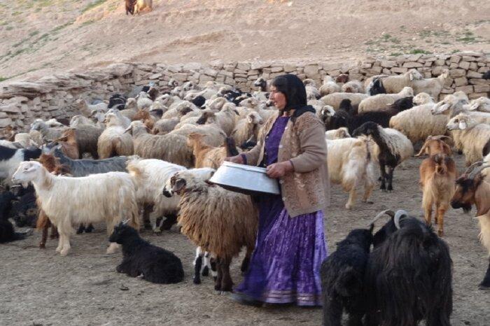 زندگی ایلی گرفتار خشکسالی و کرونا/ عشایر به فروش قسطی گوسفندان روی آوردند