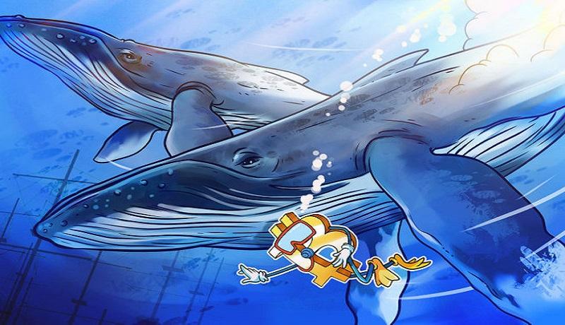 بازار دوباره جان گرفت! / نهنگها بیتکوین خریدند؟