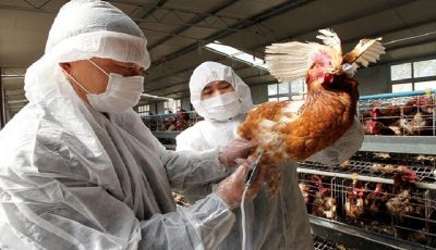 ثبت اولین مورد سرایت نوع جدید آنفلوانزای مرغی به انسان در چین