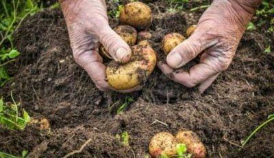 قصه تلخ دلالان غیرمولد و صنعت غذایی کشور