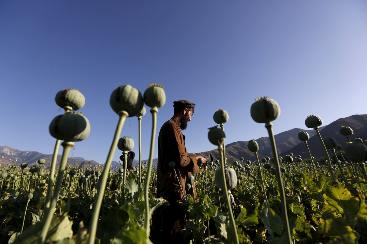 تاکتیکِ تریاکیِ طالبان / چرا طالبان کشت تریاک را ممنوع کرد؟